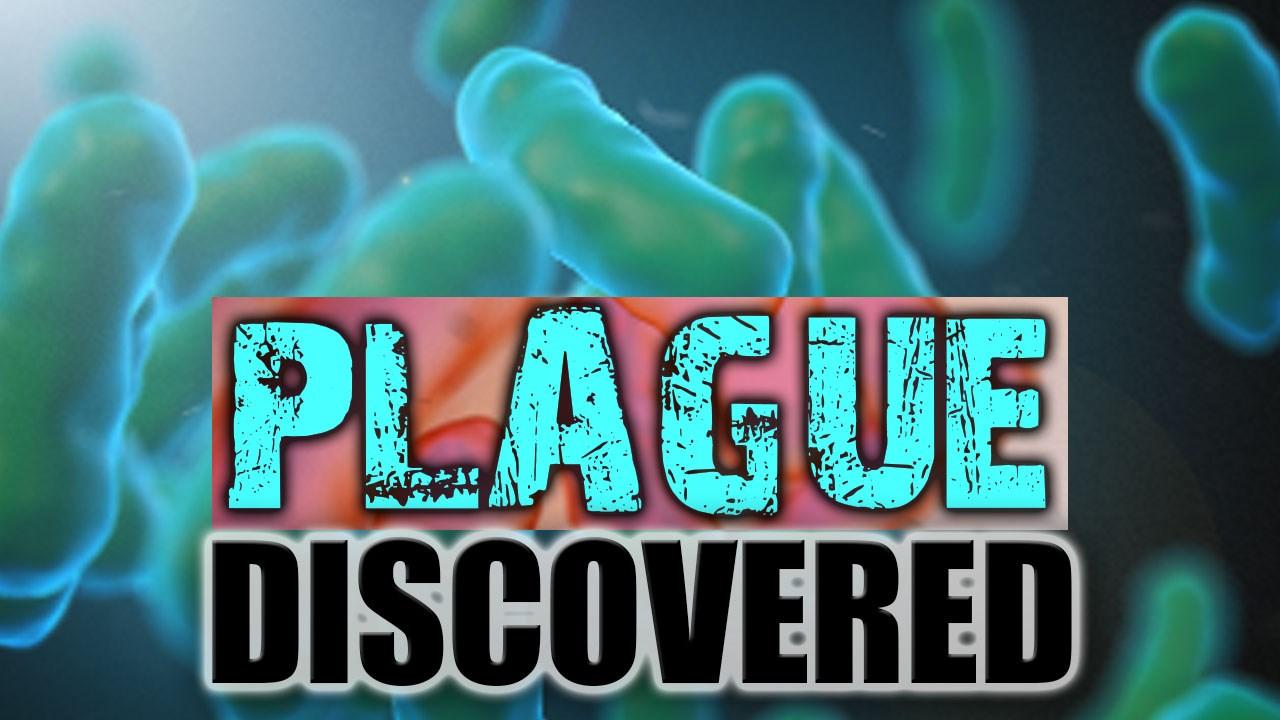 Plague_1464923536623.jpg