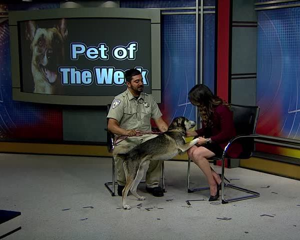 Pet of the Week- Ruckus_73425513