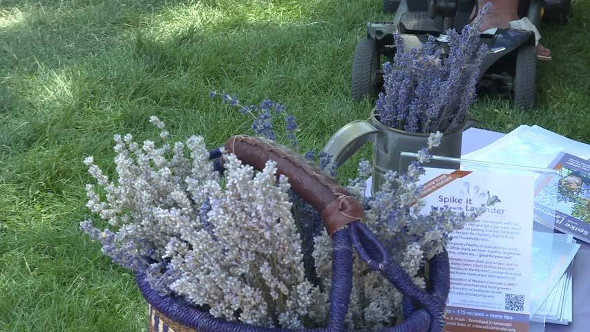 Lavender Festival_31922815