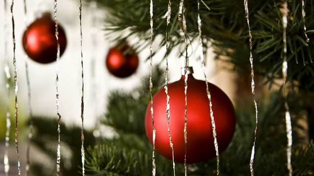White River National Forest Christmas tree permits available