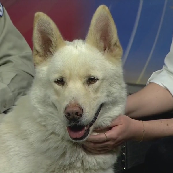 Pet of the Week: Bear!