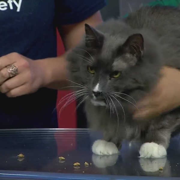 Cat of the Week: Garbonzo!