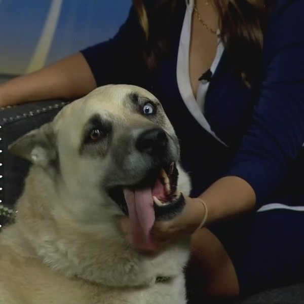 Pet Of The Week: Bueller!