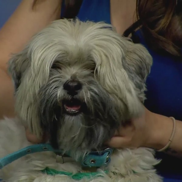 Pet of the Week: Carlton!